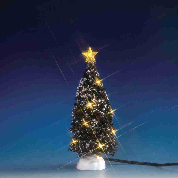 clear light evergreen tree